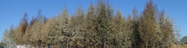 FPC Update # 01 2014 – Coldest Artic Front in Decades and Eucalyptus